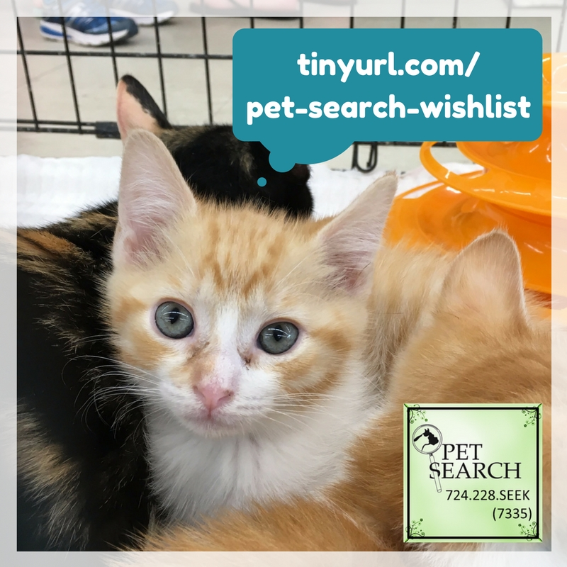 Pet Search - Animal Rescue and Placement